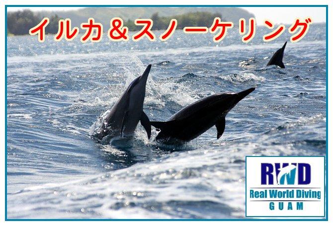 Dolphin-snokeling
